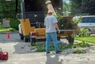 Adamsvale Tree felling services 11