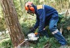 Adamsvale Tree felling services 21