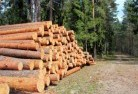 Adamsvale Tree felling services 31