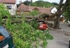 Adamsvale Tree felling services 41