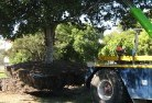 Adamsvale Tree felling services 4
