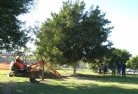 Adamsvale Tree lopping 15