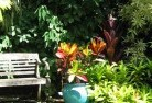 Adamsvale Tropical landscaping 11