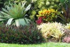 Adamsvale Tropical landscaping 9